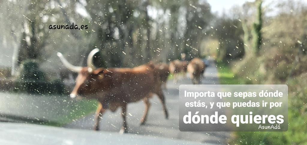"""Vacas desenfocadas a través de parabrisas de coche con caja de texto: """"Importa que sepas dónde estás, y que puedas ir por dónde quieres"""" por AsunAdá y www.asunada.es"""