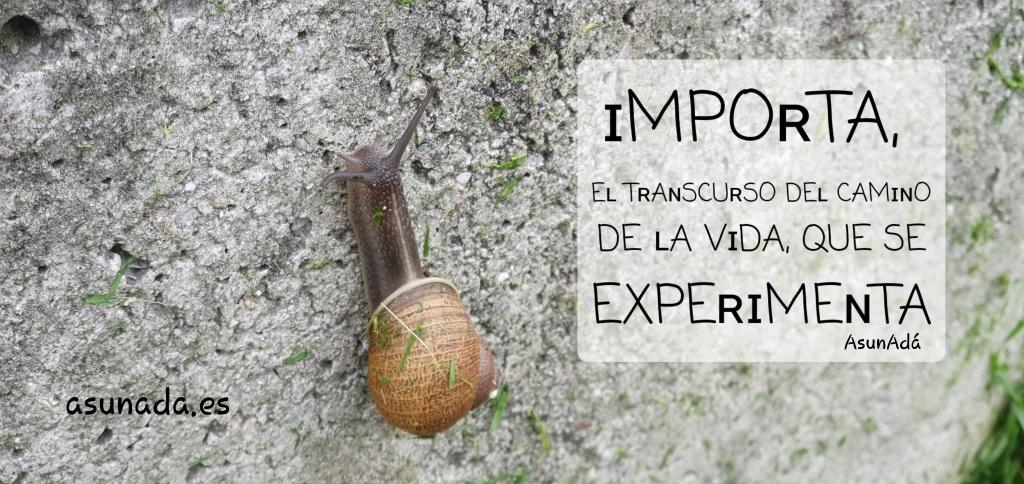 Caracol subiendo por pared gris y caja de texto: ɪMPOʀTA, Eʟ TʀAɴSCUʀSO DEʟ CAMɪɴO DE ʟA VɪDA, QUE SE EXPEʀɪMEɴTA por AsunAdá y www.asunada.es