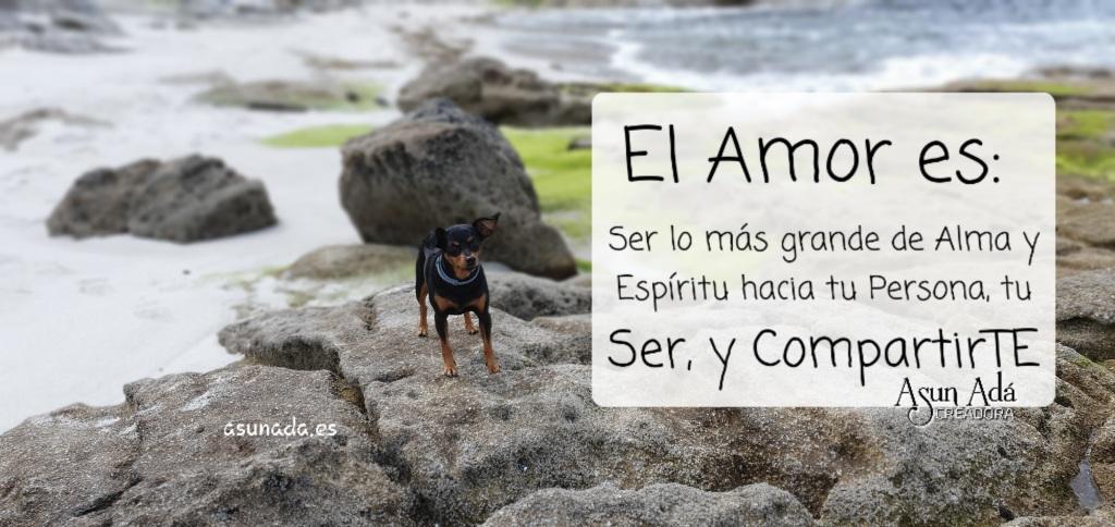 Minipincher en roca junto al mar con Caja de texto El Amor es:  Ser lo más grande de Alma y Espíritu hacia tu Persona, tu Ser, y CompartirTE, por AsunAdá
