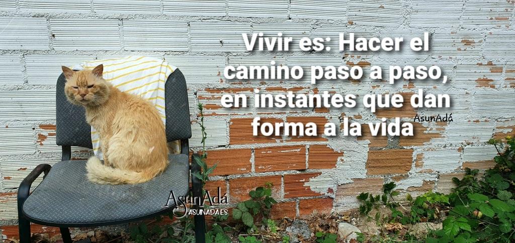 Gato pardo amarillo sentado en una silla gris delante de una pared de ladrillo rojo, con algunos pintados en blanco, y caja de texto: Vivir es: Hacer el camino paso a paso, en instantes que dan forma a la vida, hecho por AsunAdá
